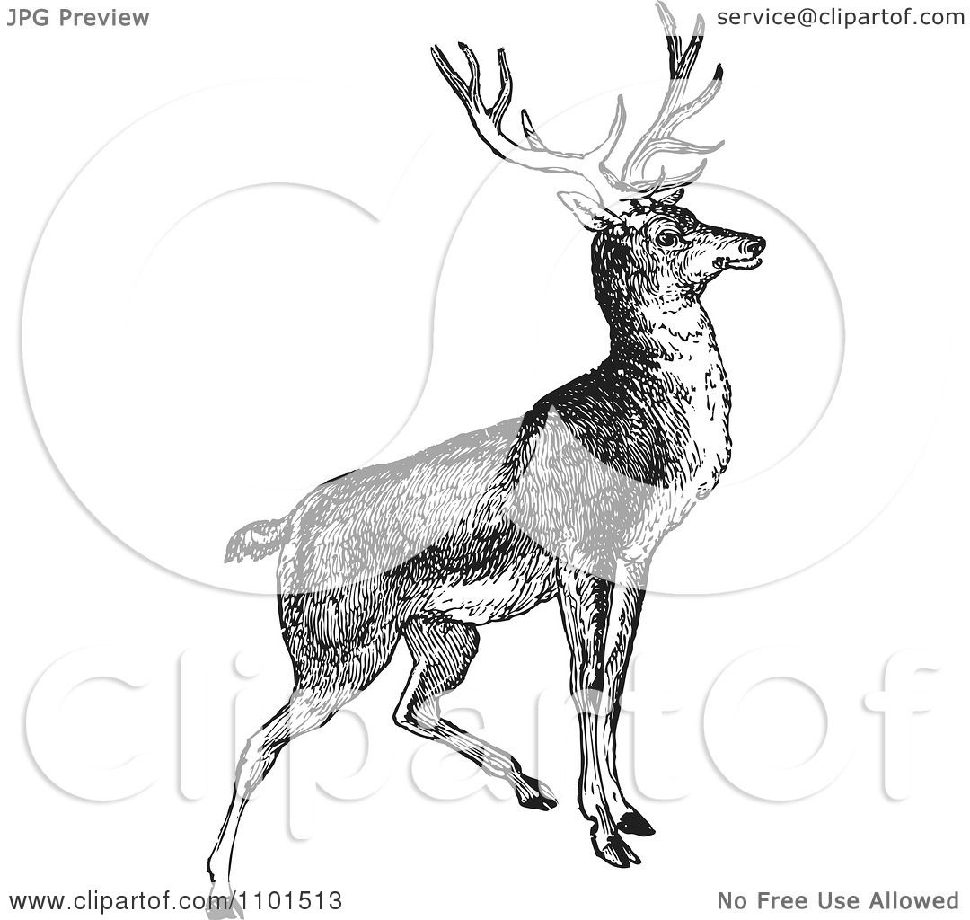 Deer illustration black and white - photo#26