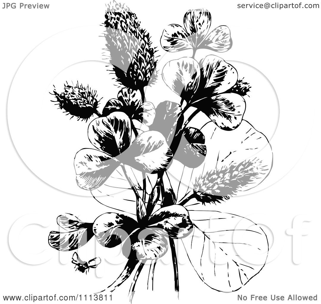 Classic Retro Illustration: Clipart Retro Black And White Bee And Clover Plant