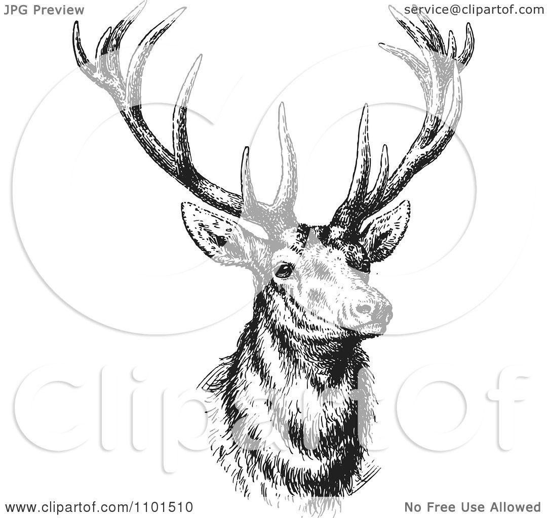Deer illustration black and white - photo#11