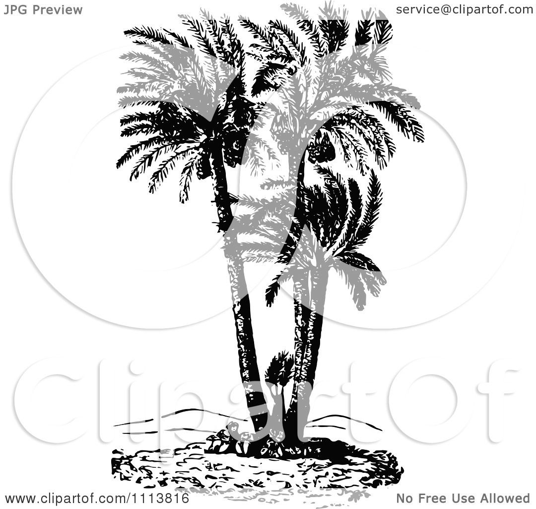 Palm Tree Clipart Black And White Clipart Retro Black And White