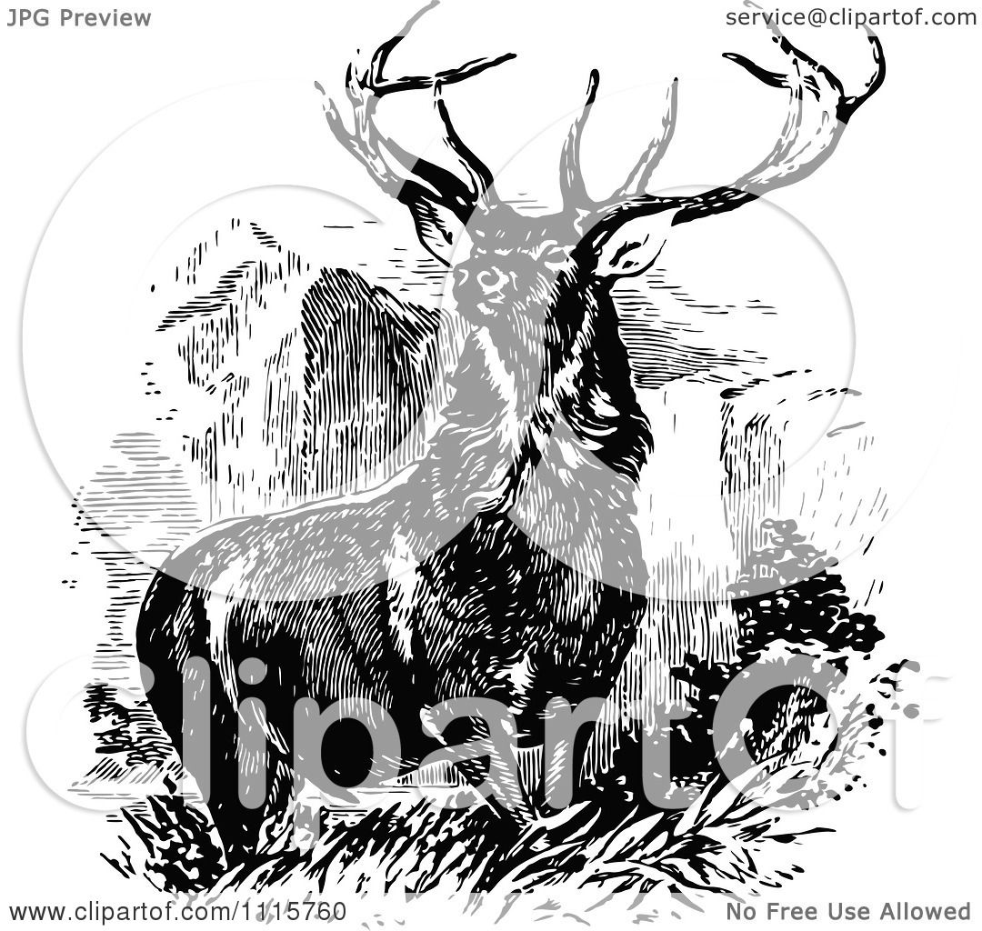 Deer illustration black and white - photo#40