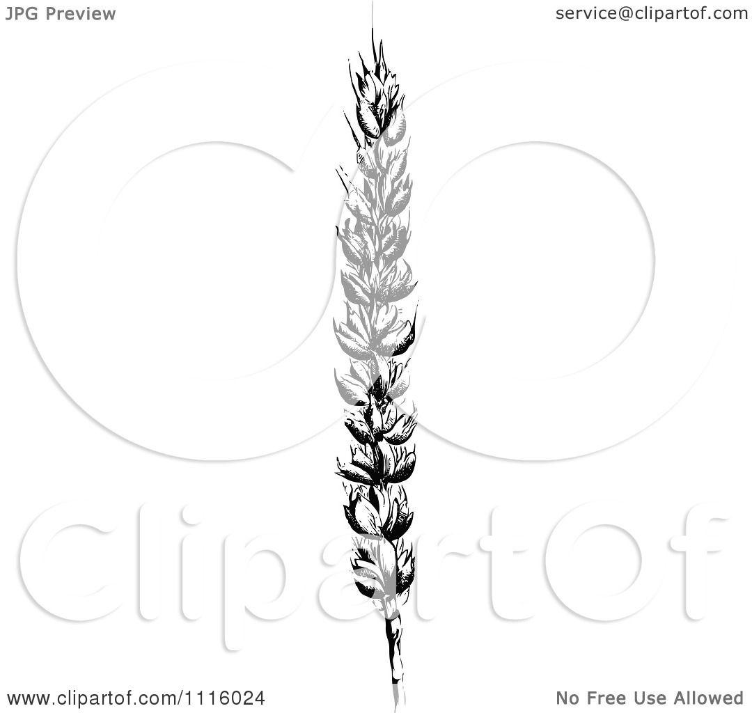 Clipart Retro Vintage Black And White Wheat Stalk 2 ...