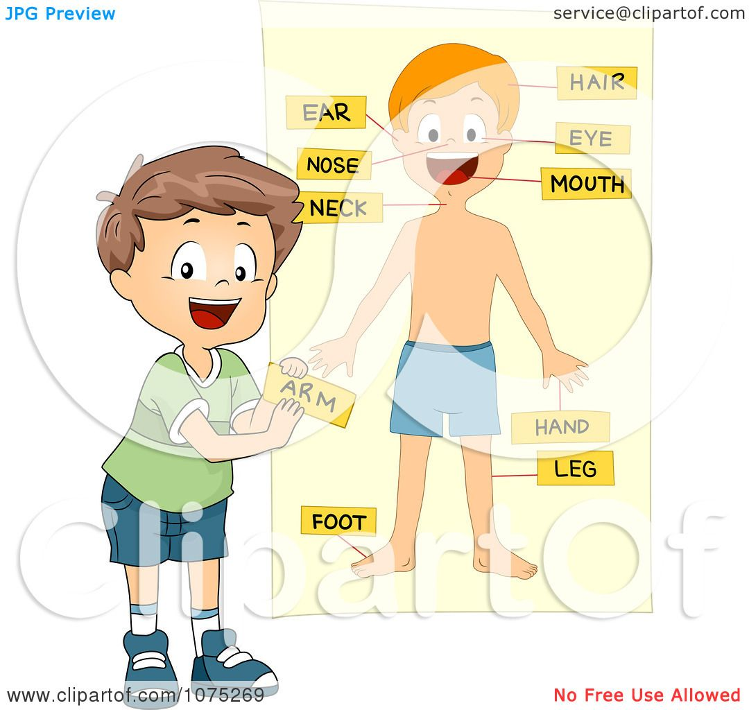 Clipart School Boy Tagging Body Parts On A Chart - Royalty Free ...