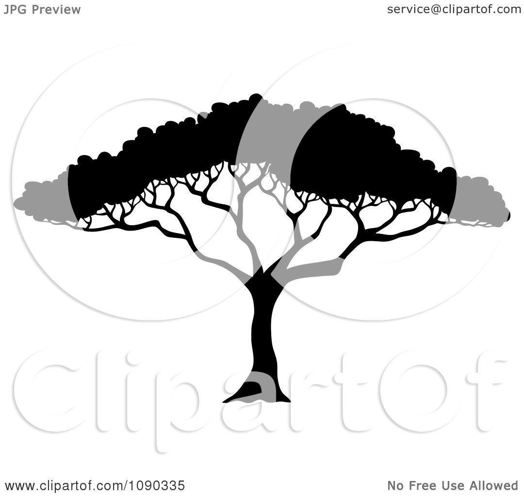 Clipart Silhouetted Acacia