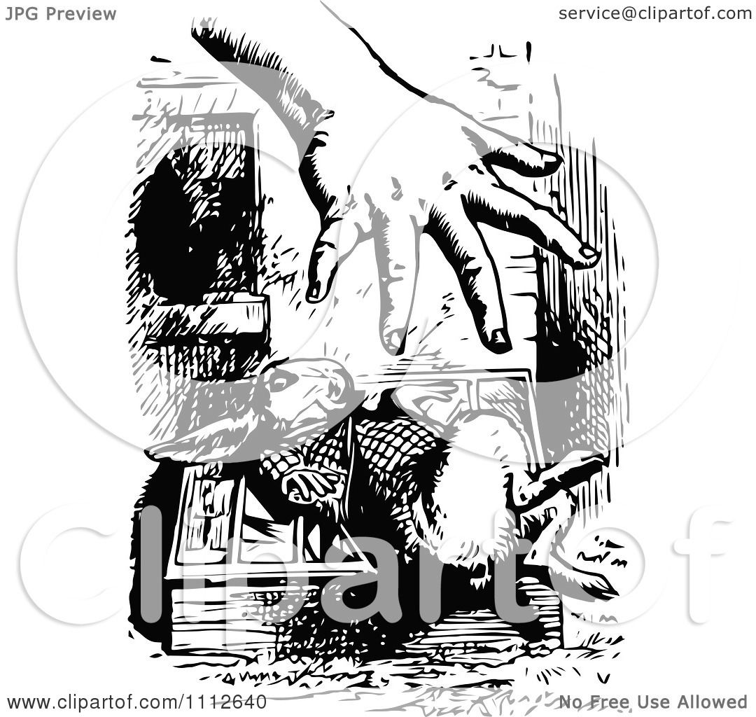 clipart  white rabbit shying    hand