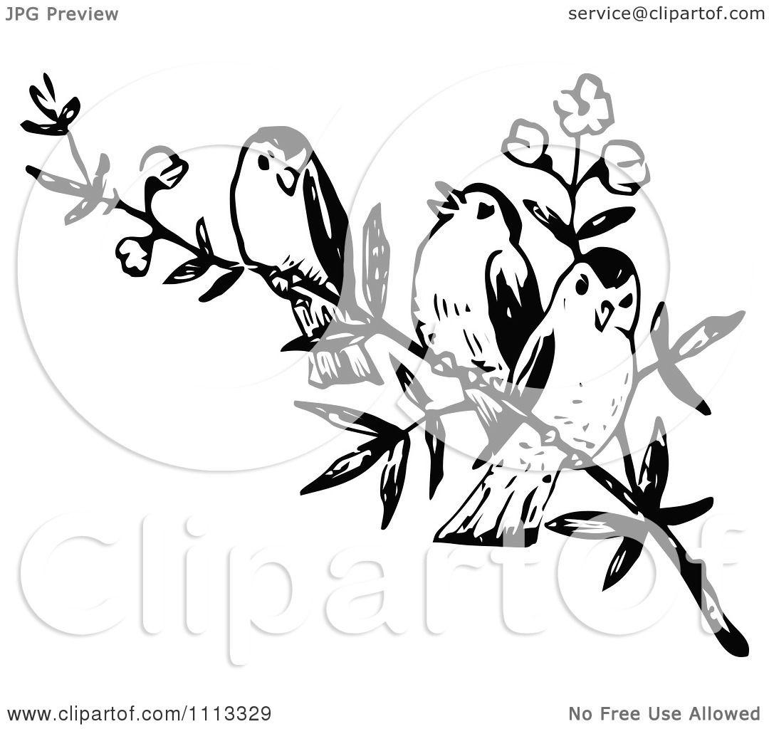 Vintage Bird Art Black And White Clipart Three Vintage Black