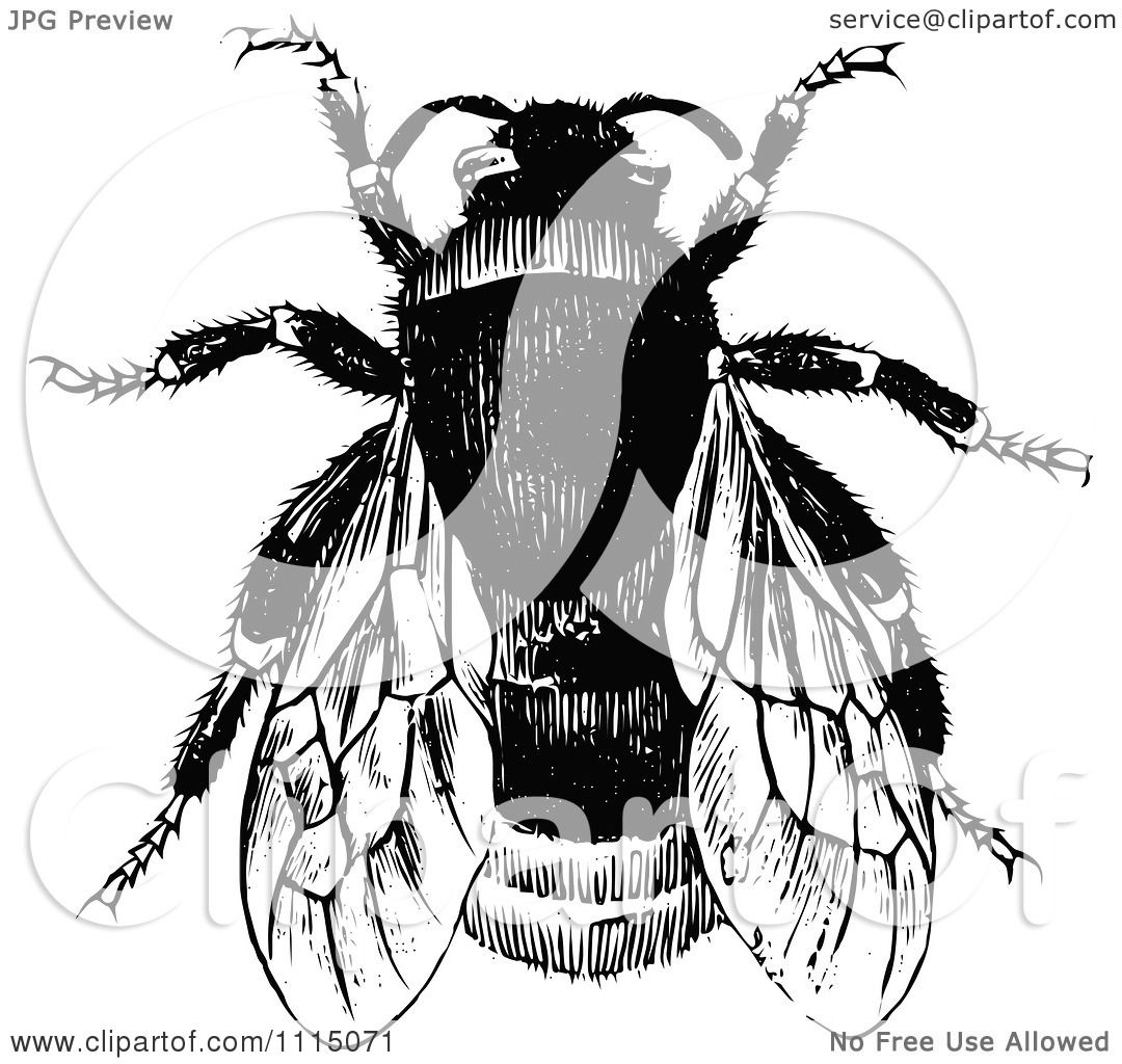 Clipart Vintage Black And White Bumble Bee 1