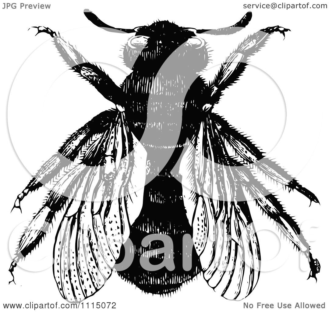 Clipart Vintage Black And White Bumble Bee 2