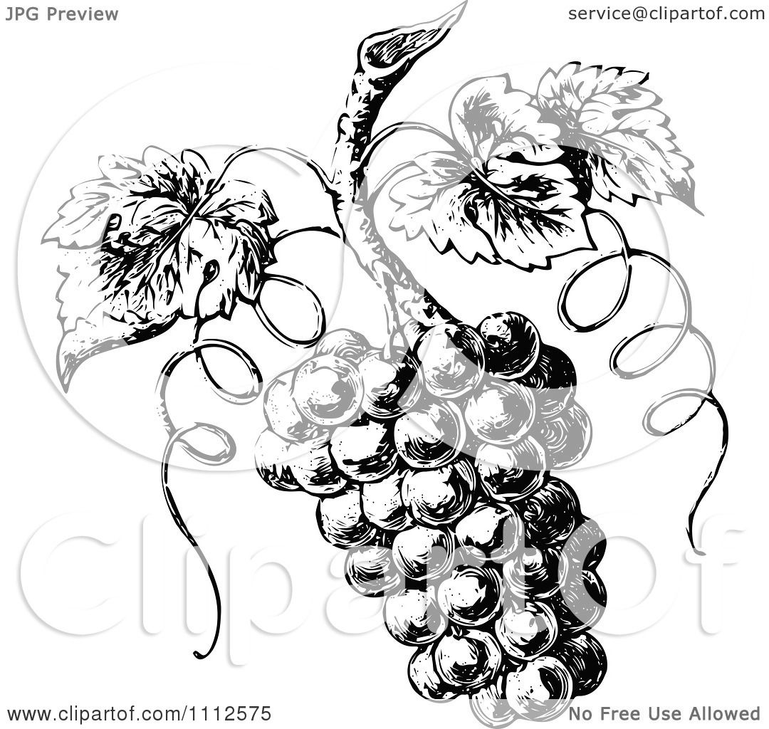 Clipart Vintage Black And White Grapes On The Vine - Royalty Free ...