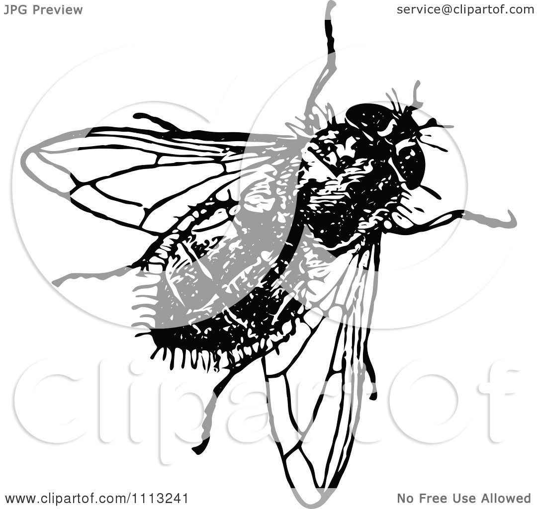 Clipart Vintage Black And White House Fly - Royalty Free Vector ...