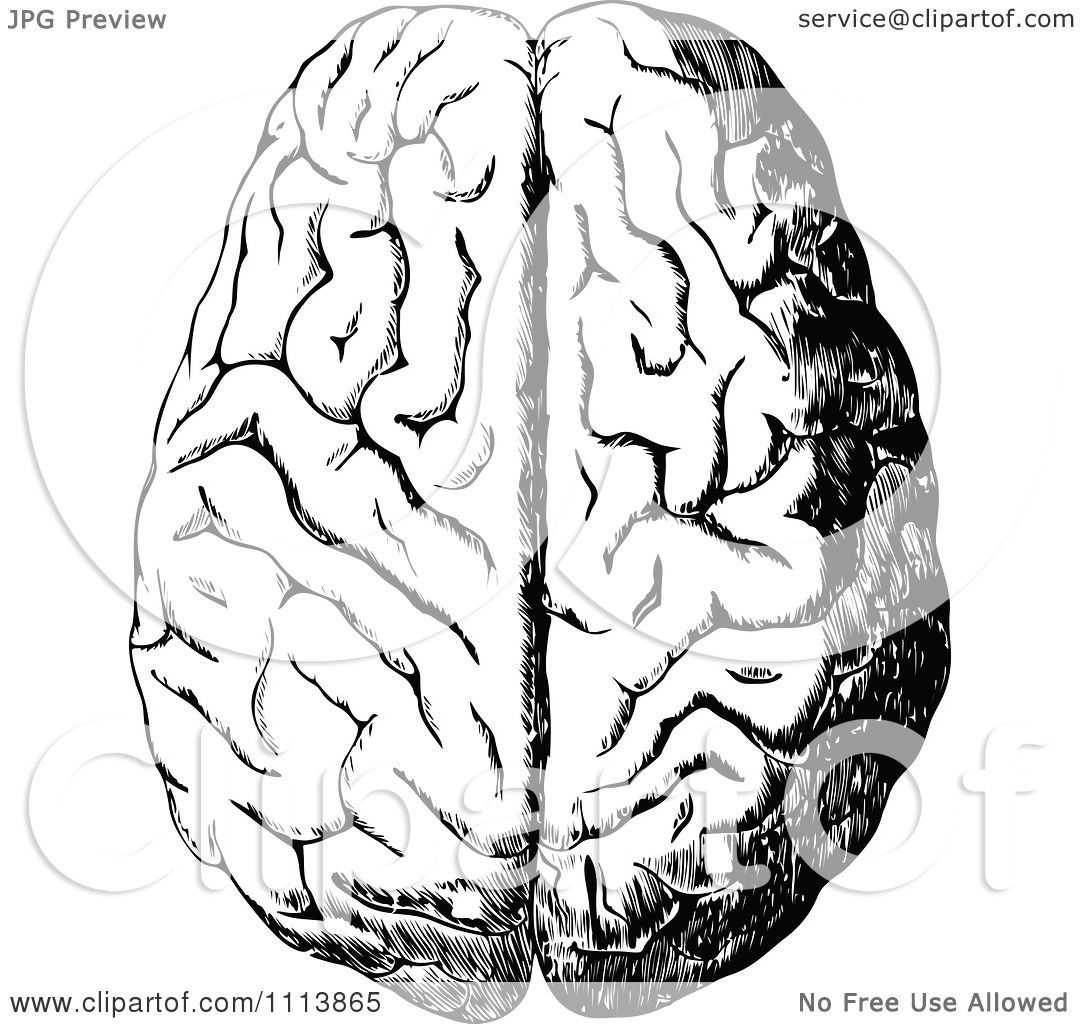 Clipart Vintage Black And White Human Brain 1 - Royalty ...