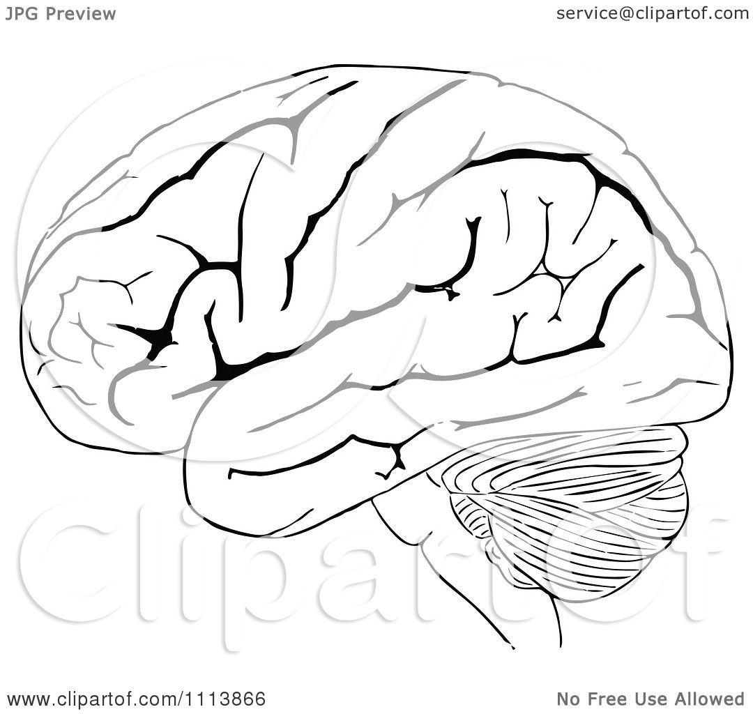 Clipart Vintage Black And White Human Brain 2 Royalty