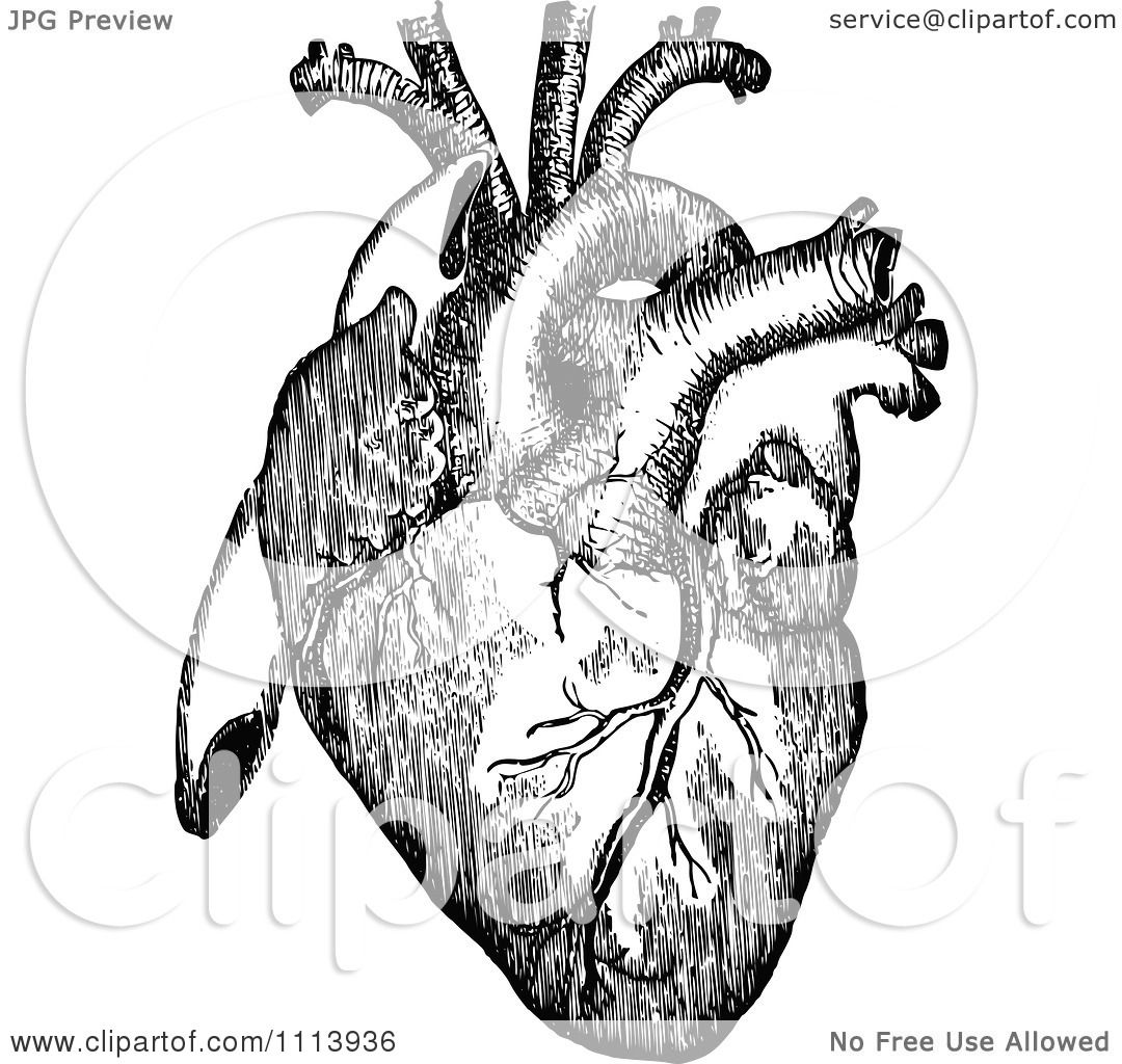 Clipart Vintage Black And White Human Heart - Royalty Free ...