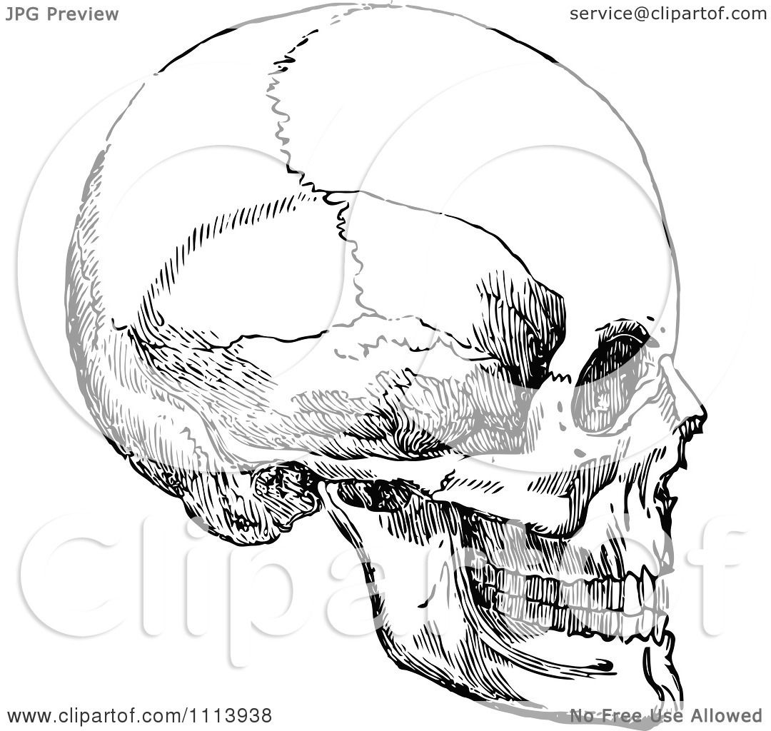 Clipart Vintage Black And White Human Skull 3 Royalty