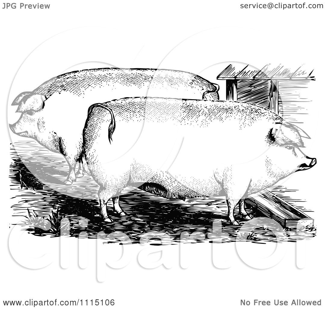 Clipart Vintage Black And White Pigs In A Pen Royalty
