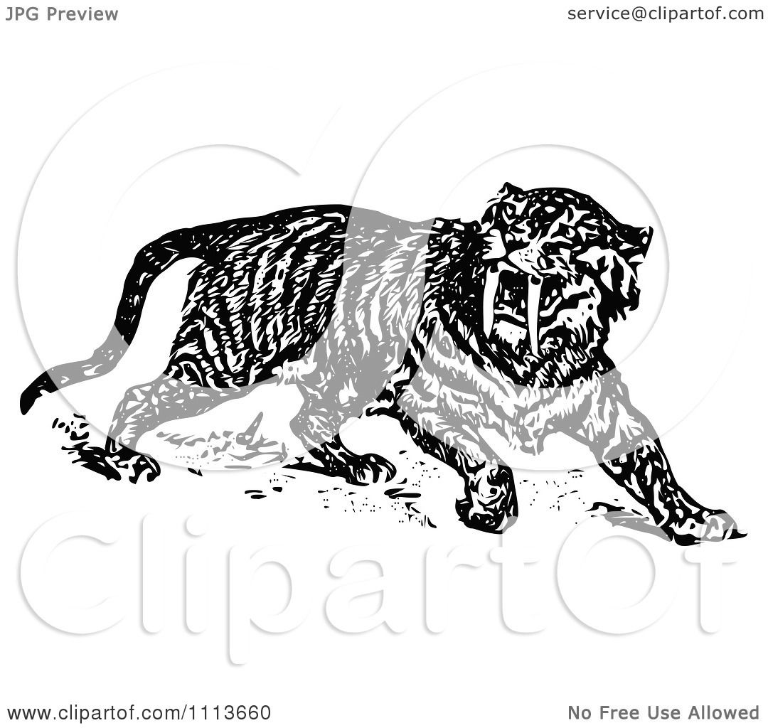 Clipart Vintage Black And White Sabre Tooth Tiger