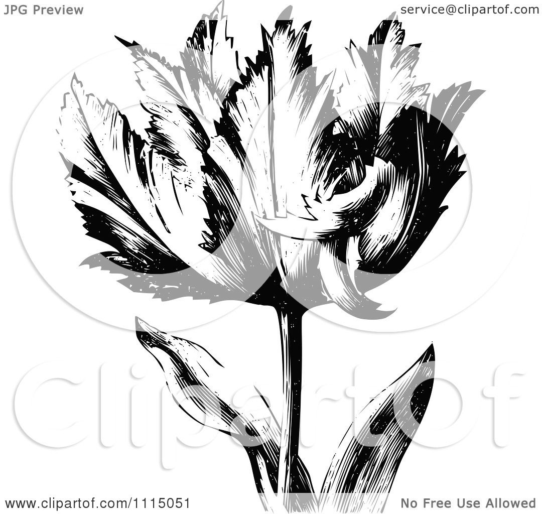 Clipart Vintage Black And White Spring Tulip Flower 1