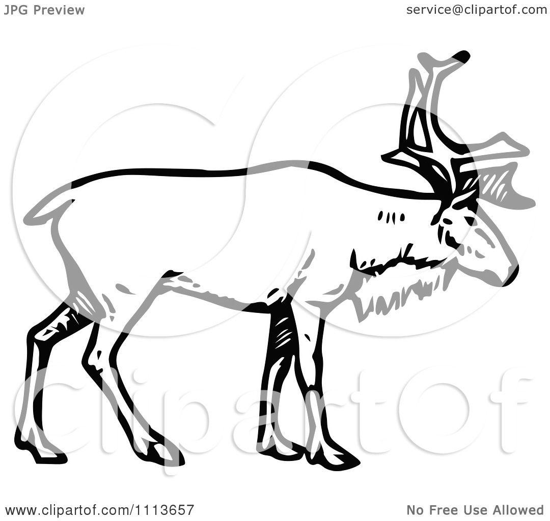 Deer illustration black and white - photo#33