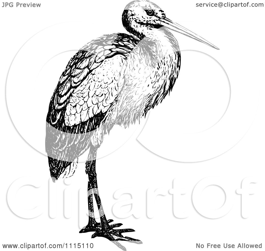 Clipart Vintage Black And White Stork Bird - Royalty Free ...