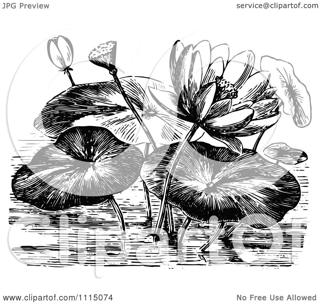 Clipart Vintage Black And White Water Lily Flowers And ...