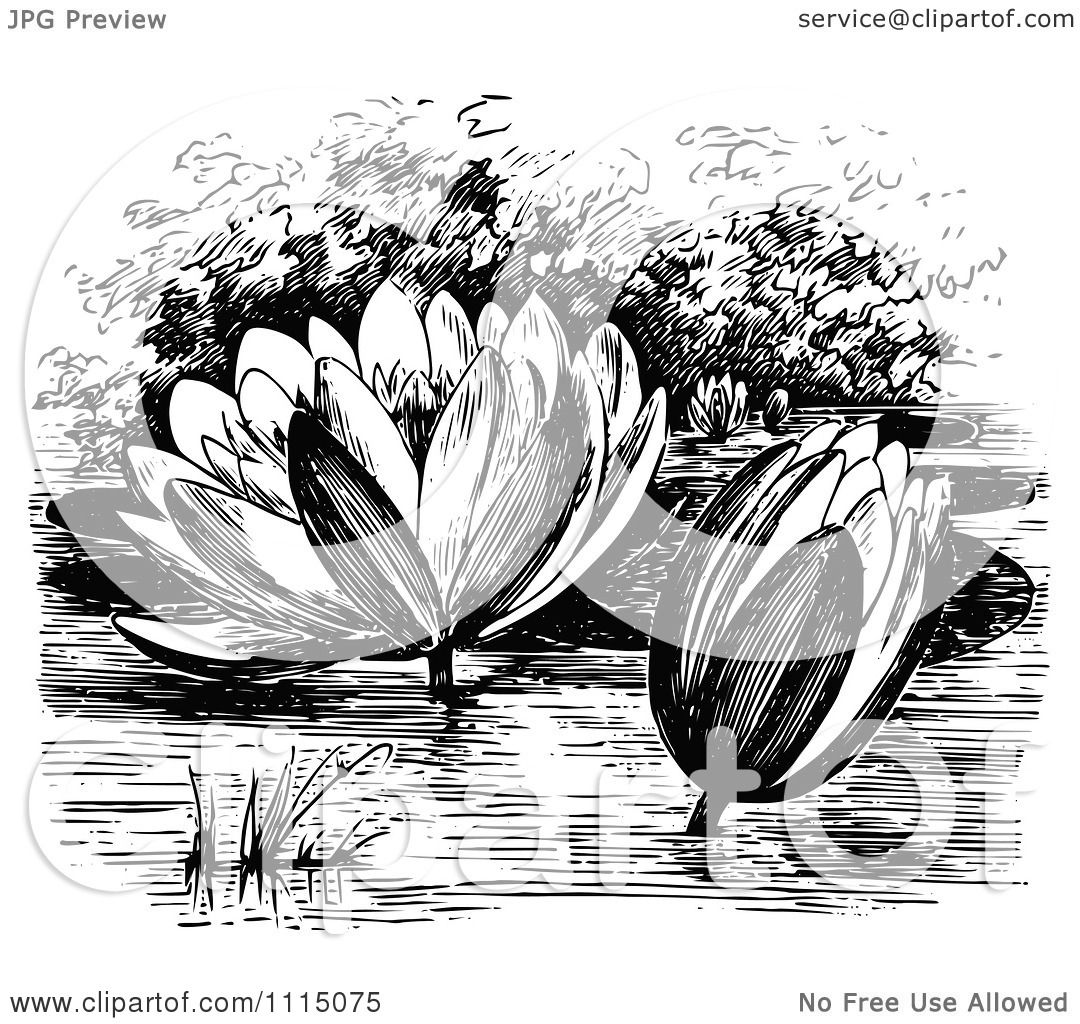 Clipart Vintage Black And White Water Lily Flowers ...