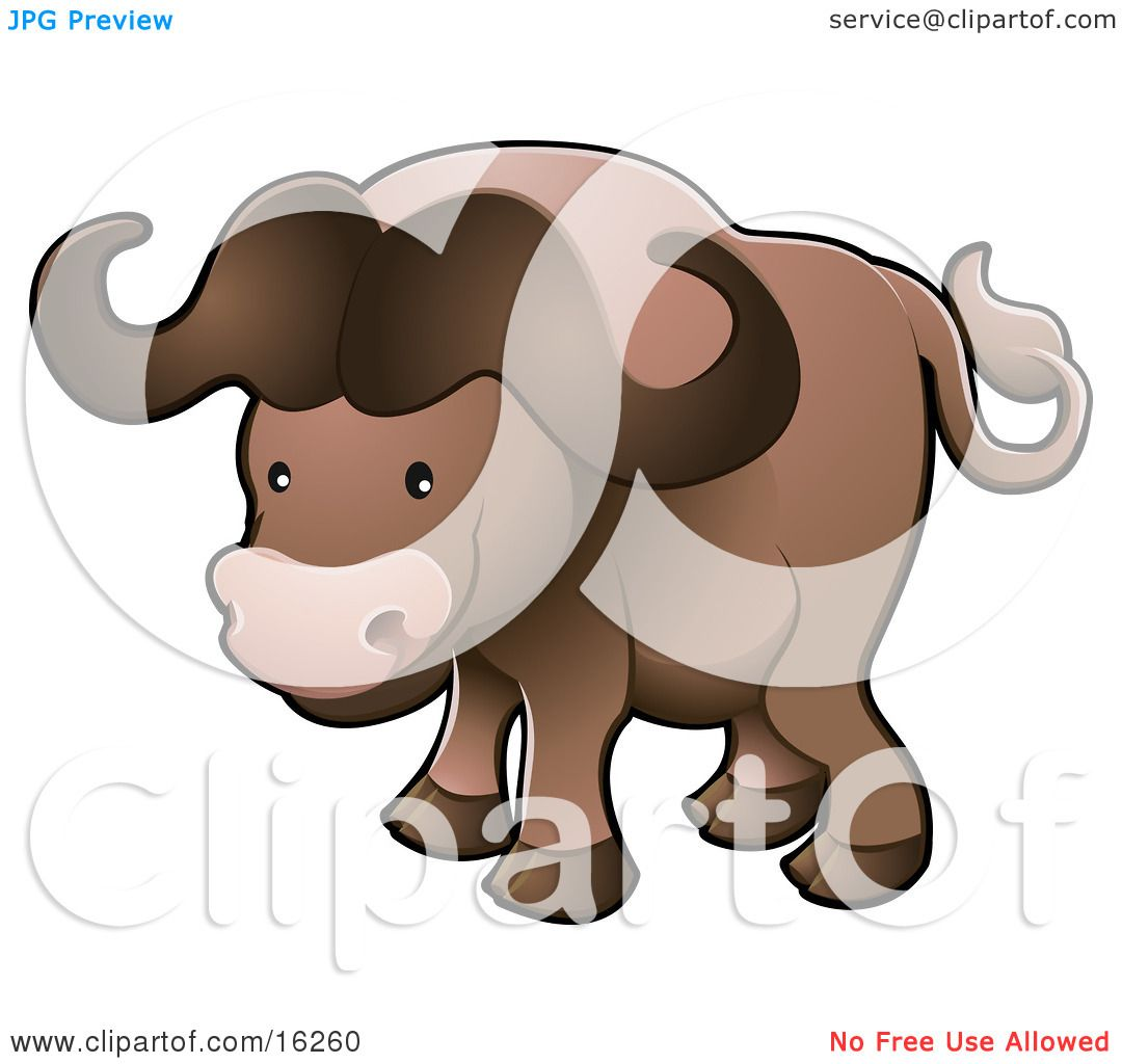 Cute Brown African Buffalo Syncerus Caffer Also Known
