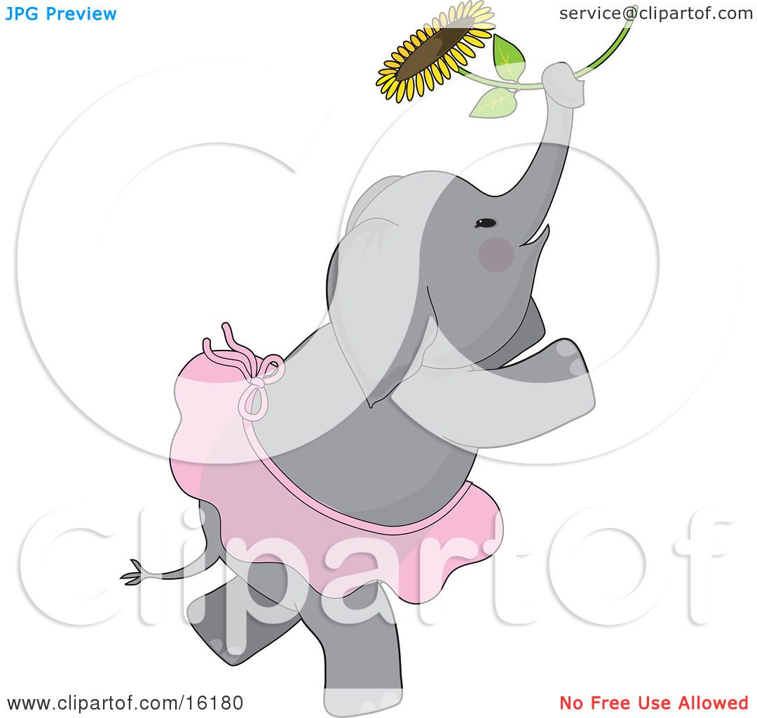 Cute Elephant With Rosey Cheeks Wearing A Ballerina Tutu