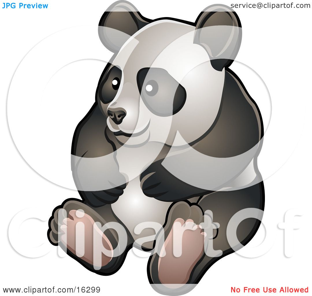 Happy Giant Panda Bear (Ailuropoda Melanoleuca) Sitting On ...