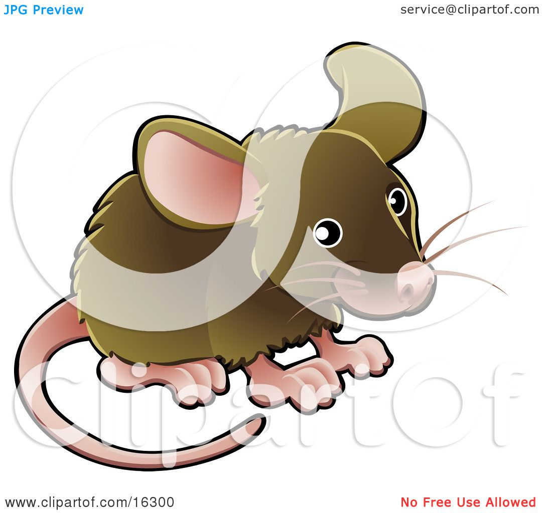 Little Brown Pet Mouse With A Pink Nose Ears Feet And