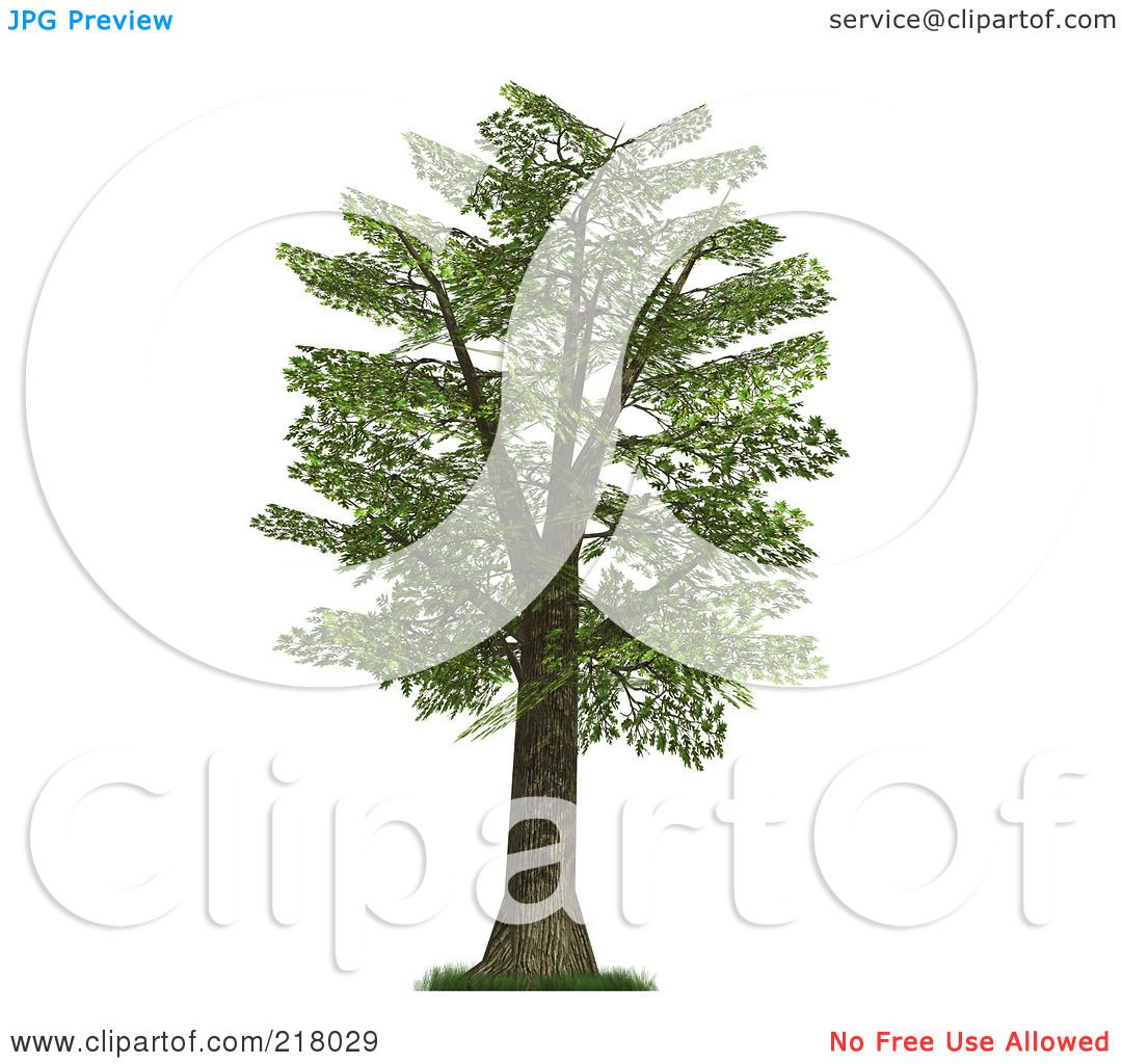 royalty free rf clipart illustration of a 3d mature oak tree