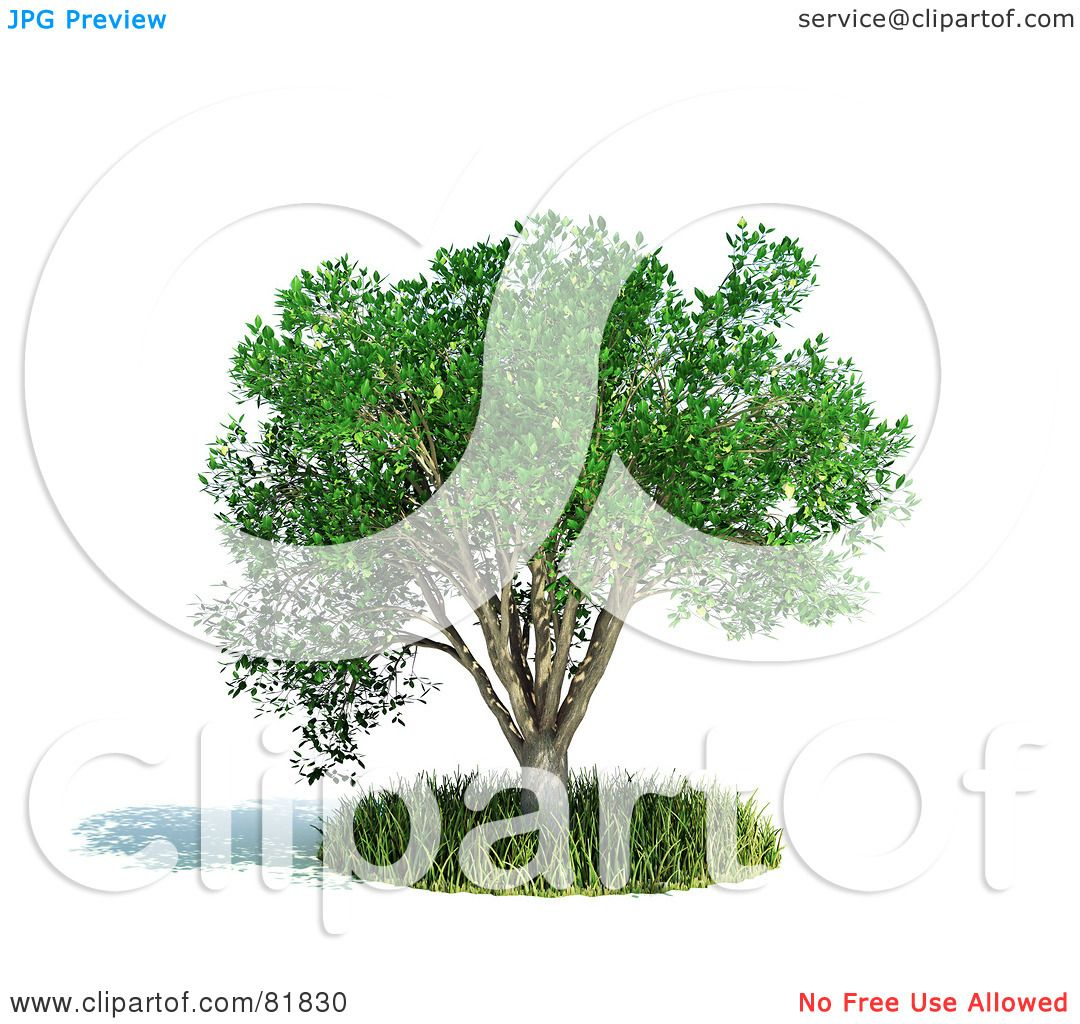 Royalty Free Rf Clipart Illustration Of A 3d Realistic Tree In A