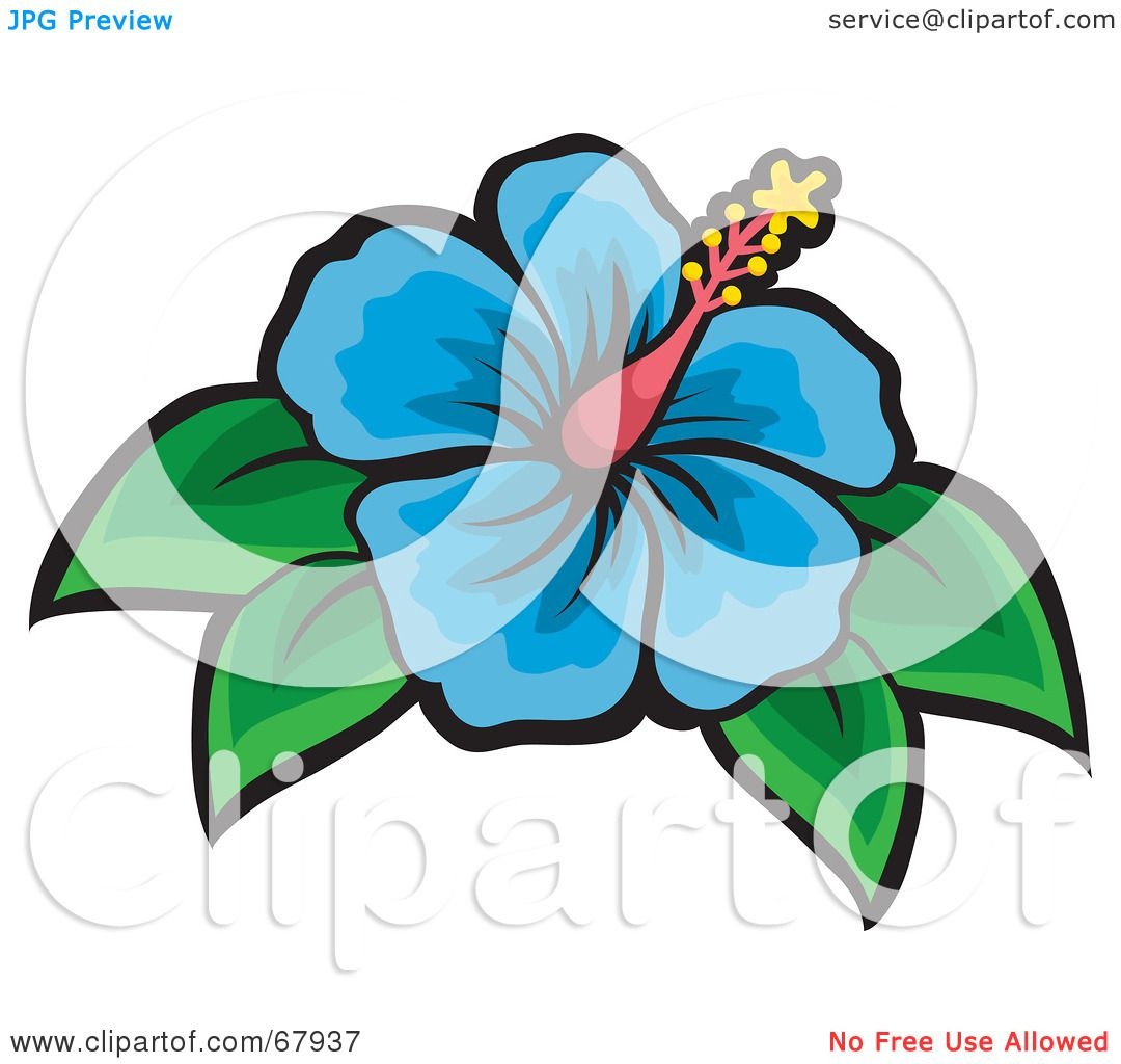 Royalty Free Rf Clipart Illustration Of A Beautiful Blue Hibiscus