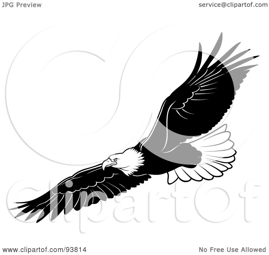 Black And White Bald Eagle  Eagle Wings Spread Clipart Black And White