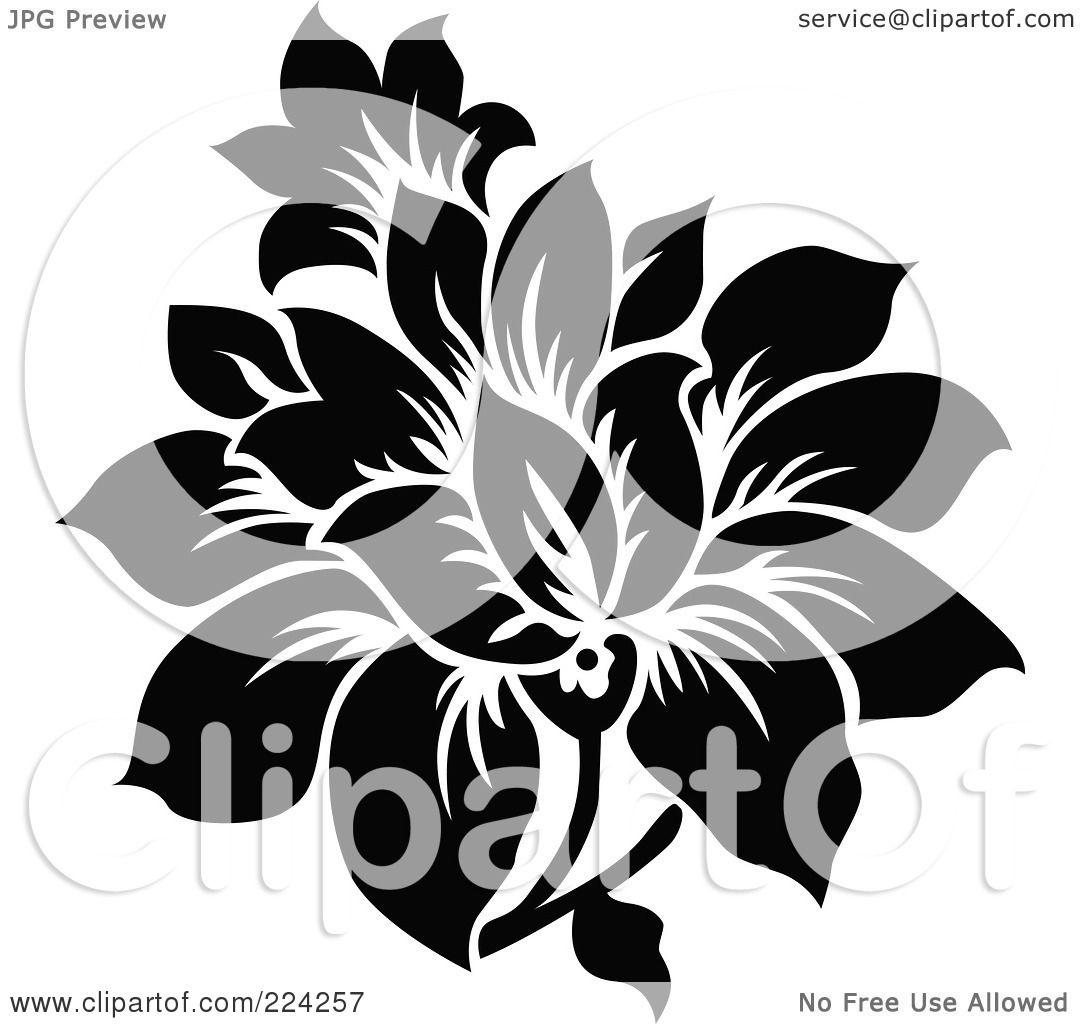 Easy Black And White Flower Design And White Flower Design