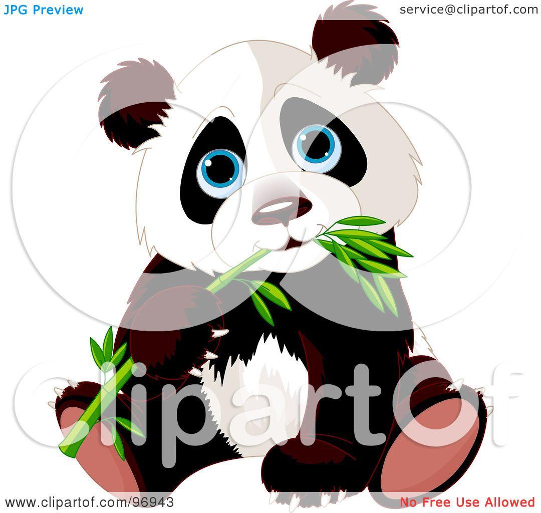 Blue Eyed Baby Panda Sitting And Munching On Bamboo By Pushkin 96943