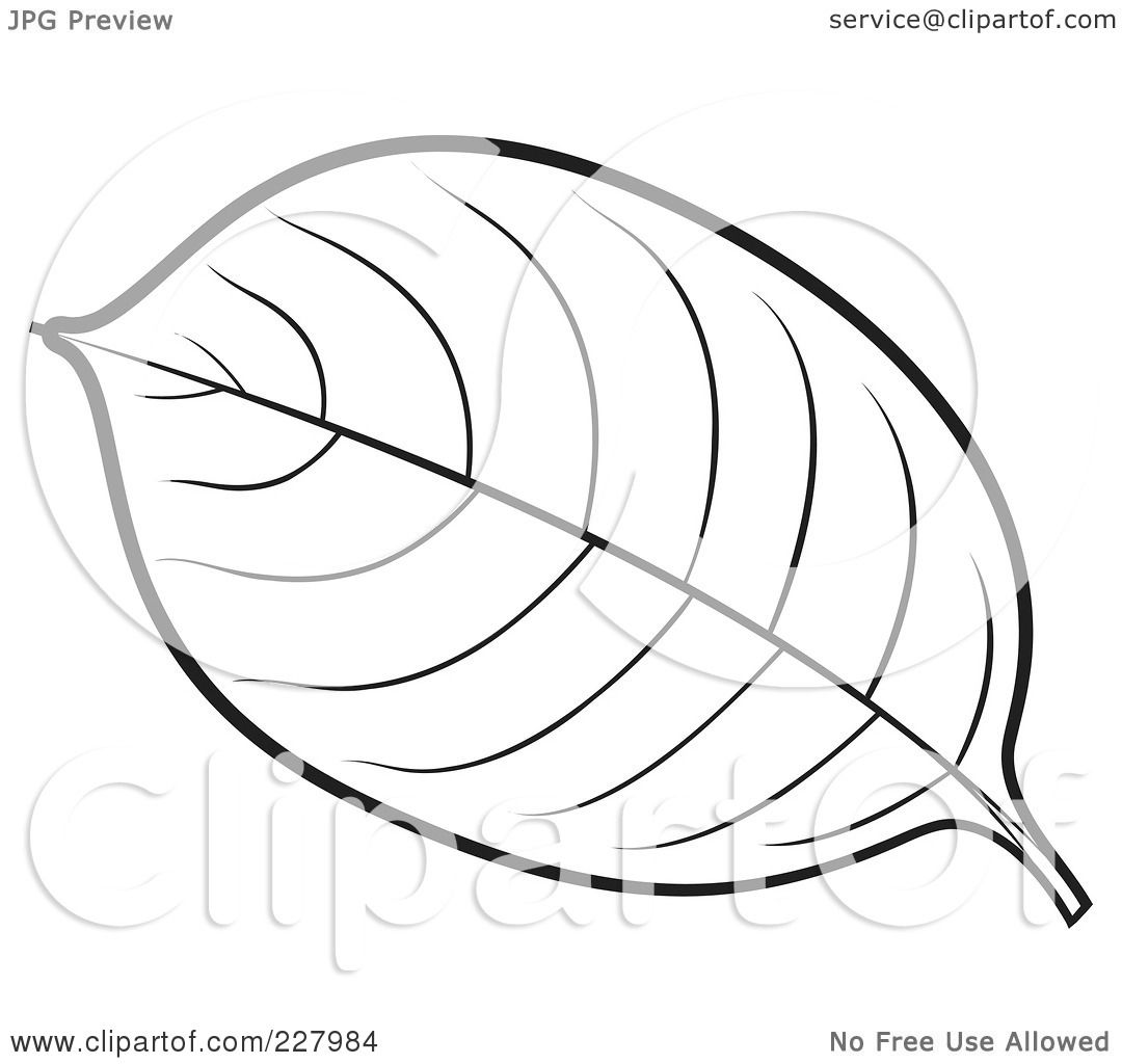 Free Coloring Pages Of Banana Leaf Template