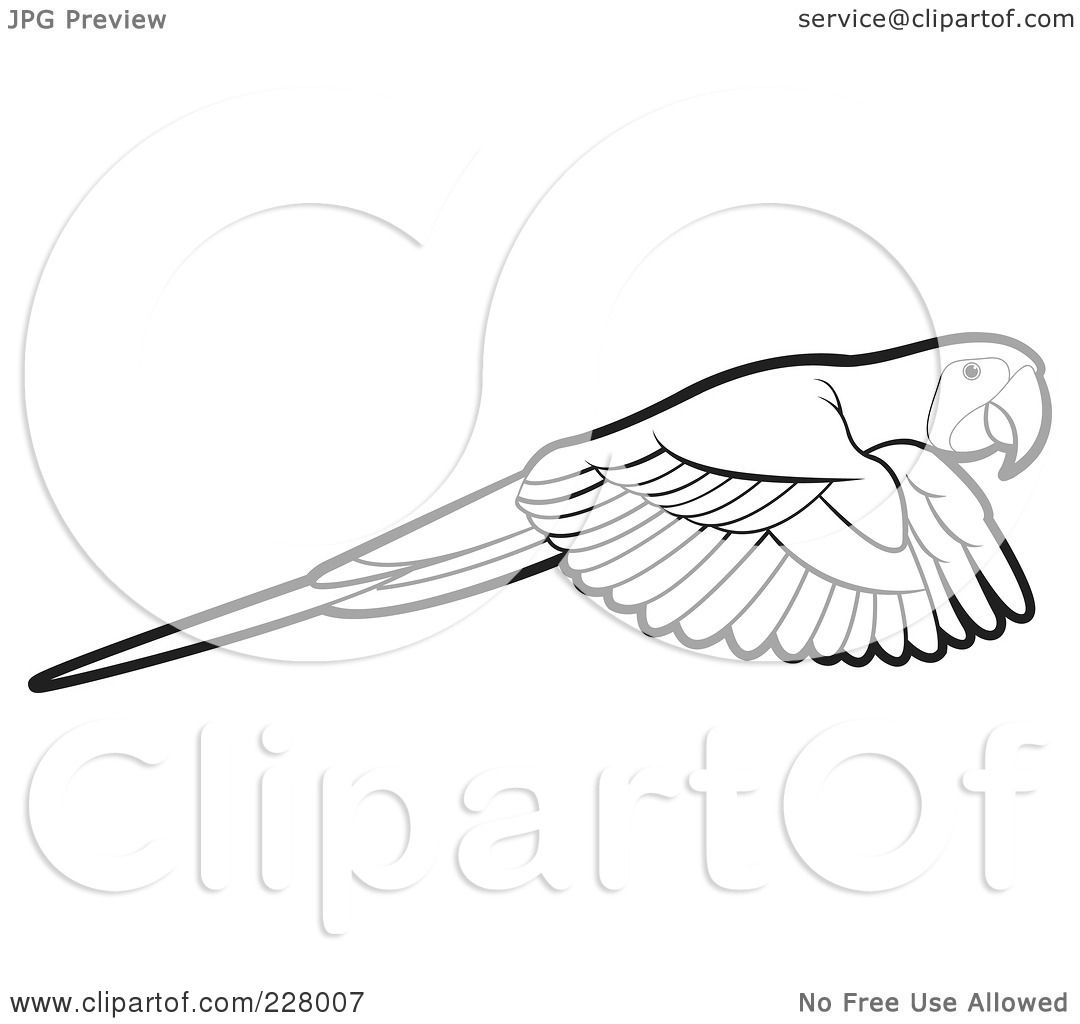 Flying Macaw Coloring Page of a Coloring Page Outline