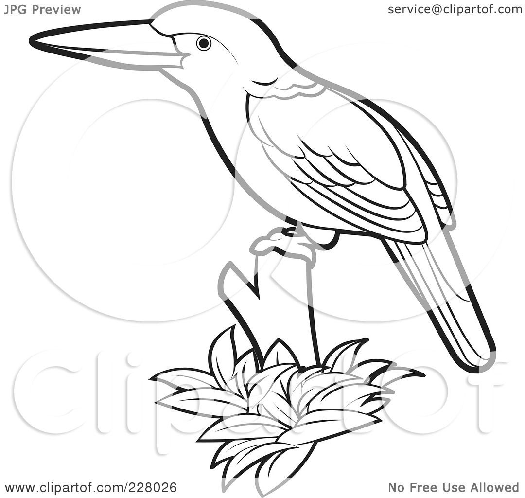 Royalty Free (RF) Clipart Illustration Of A Coloring Page Outline Of A  Perched Kingfisher Bird By Lal Perera