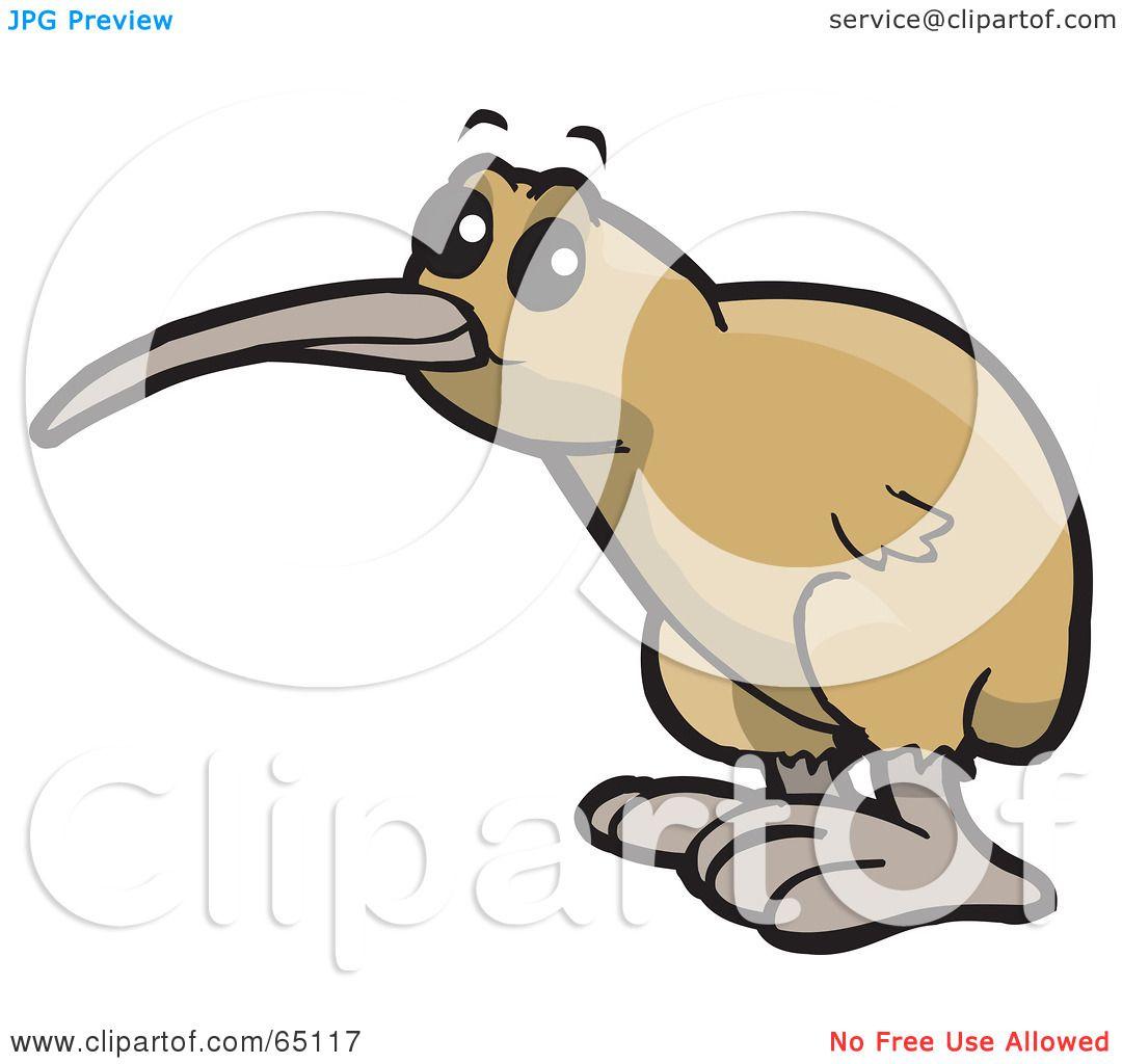 Kiwi Cartoon Drawing a Cute Kiwi Bird With Big