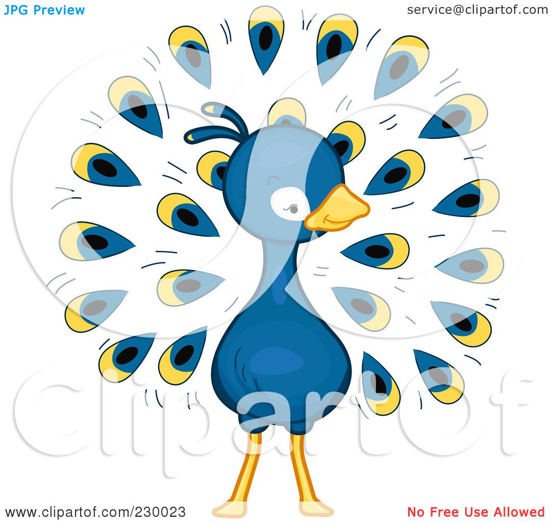 Cute Peacock Drawings of a Cute Peacock by Bnp