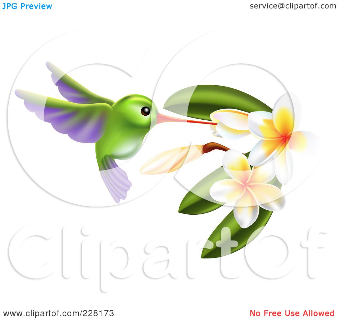 Plumeria Flowers Png With Plumeria Flowers by
