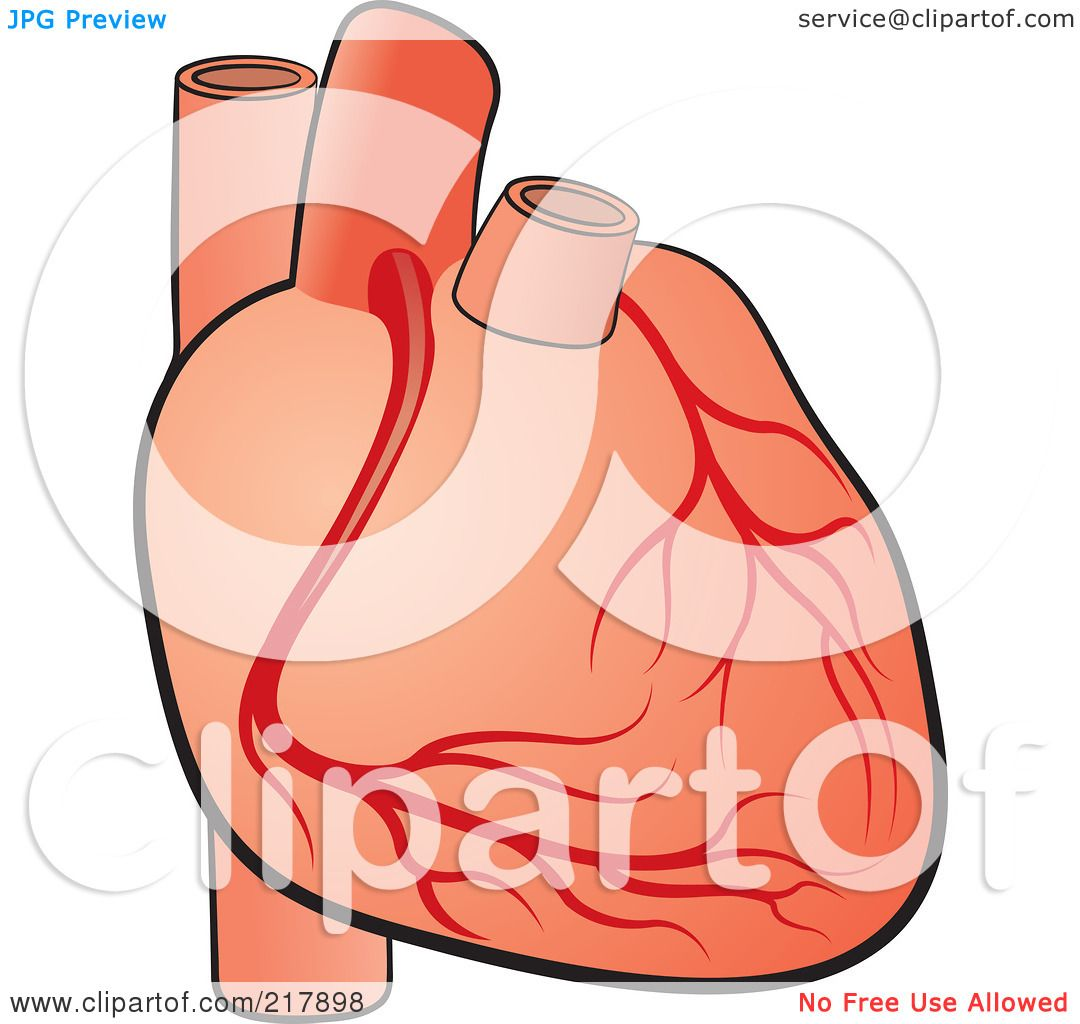 free clip art human heart - photo #50