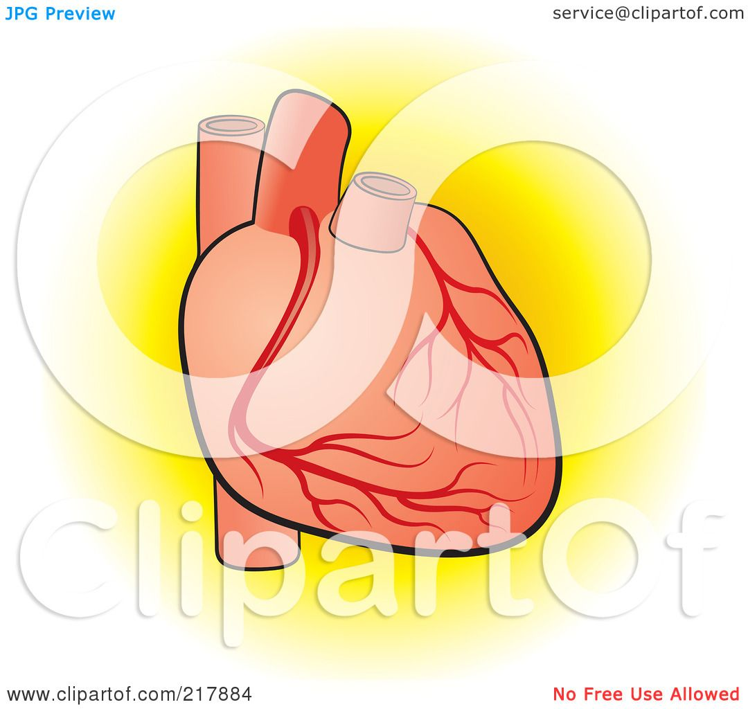 clipart of a human heart - photo #37