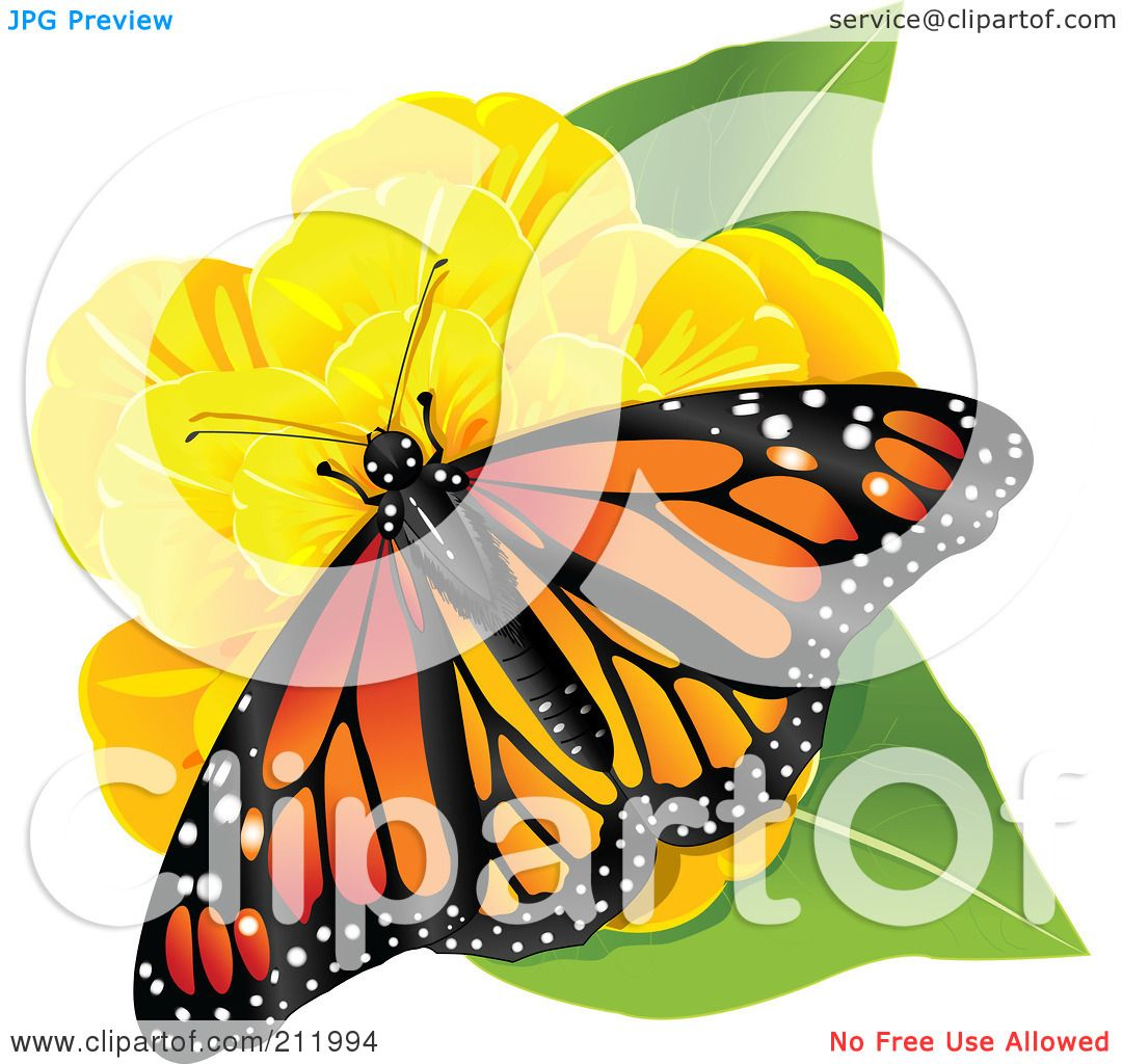 royalty free rf clipart illustration of a monarch butterfly on a