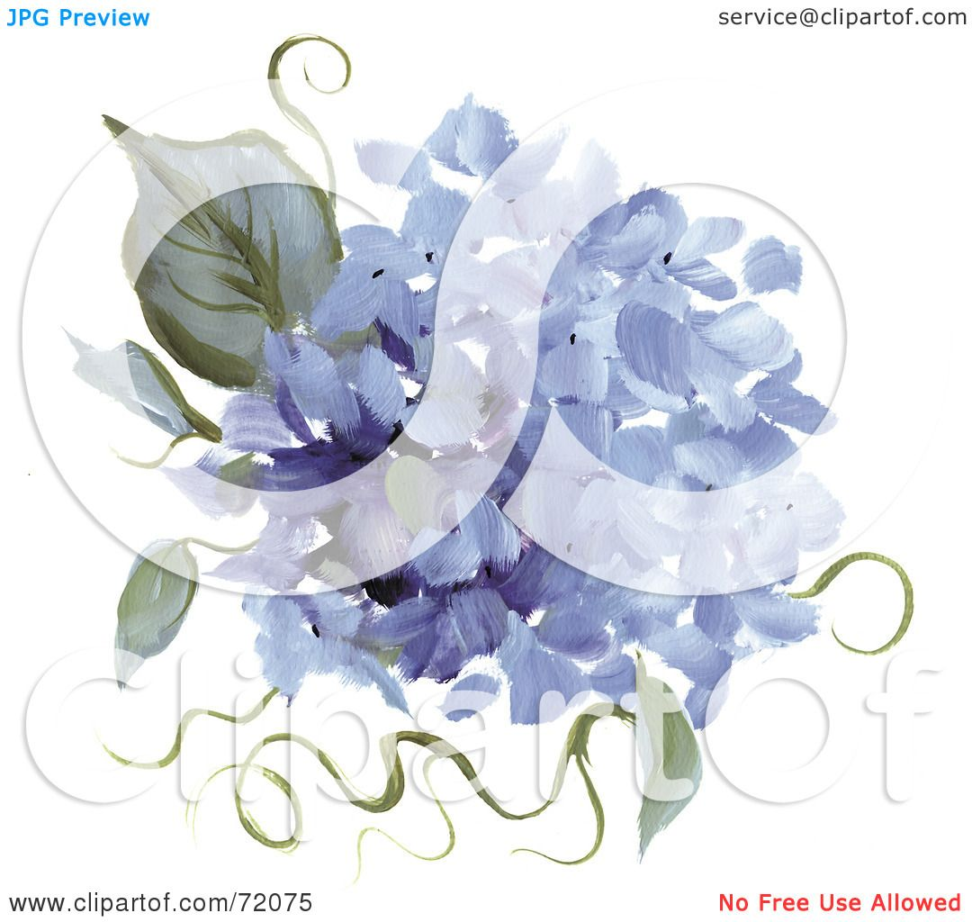 Hydrangea flower coloring pages - Royalty Free Rf Clipart Illustration Of Blue Hydrangea Flowers And Leaves By Inkgraphics