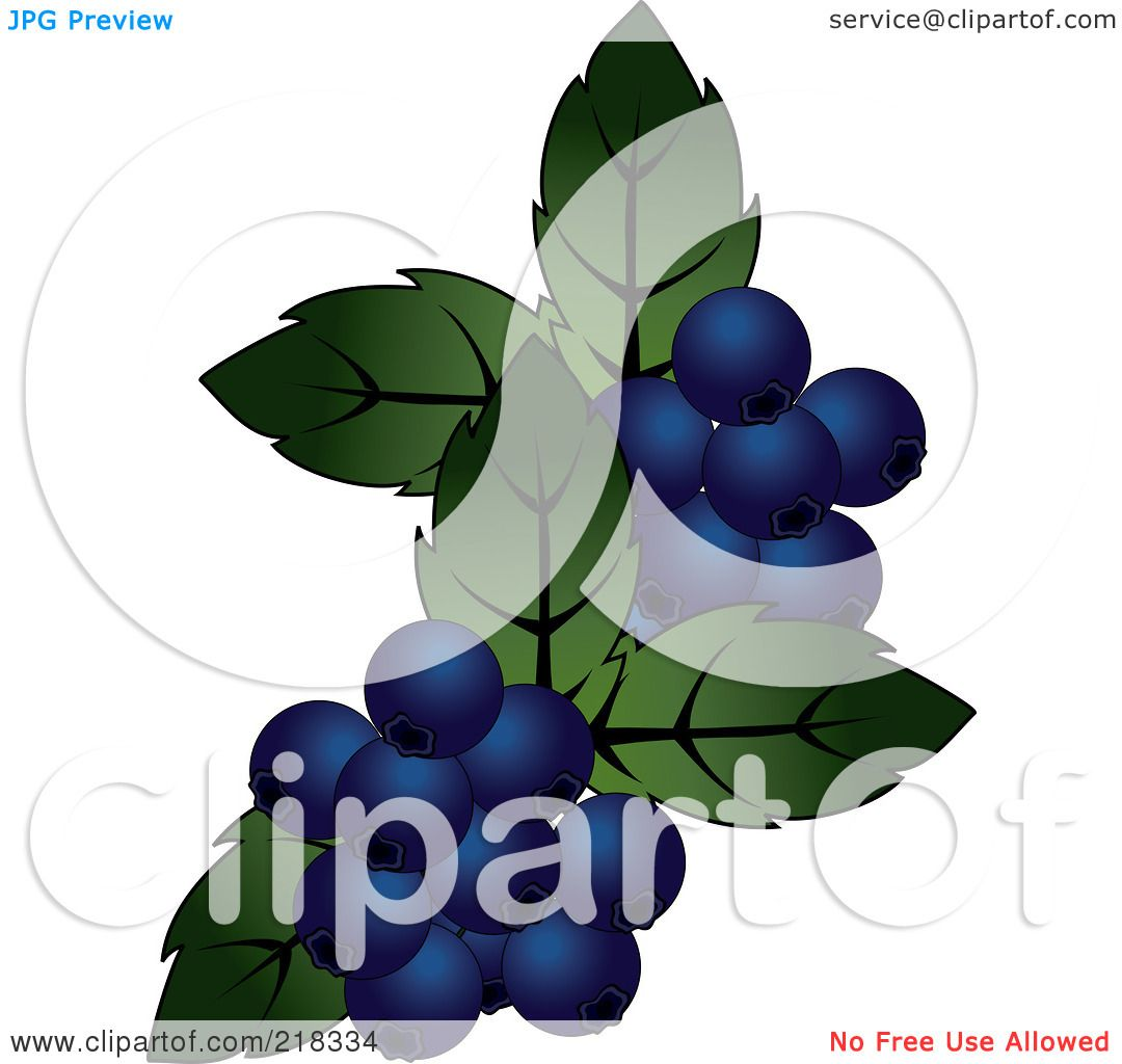 Clip Art Pictures Of Blueberries