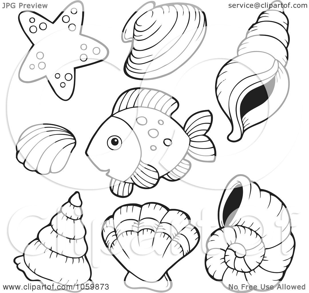 clipart brown conch shell royalty free vector illustration by