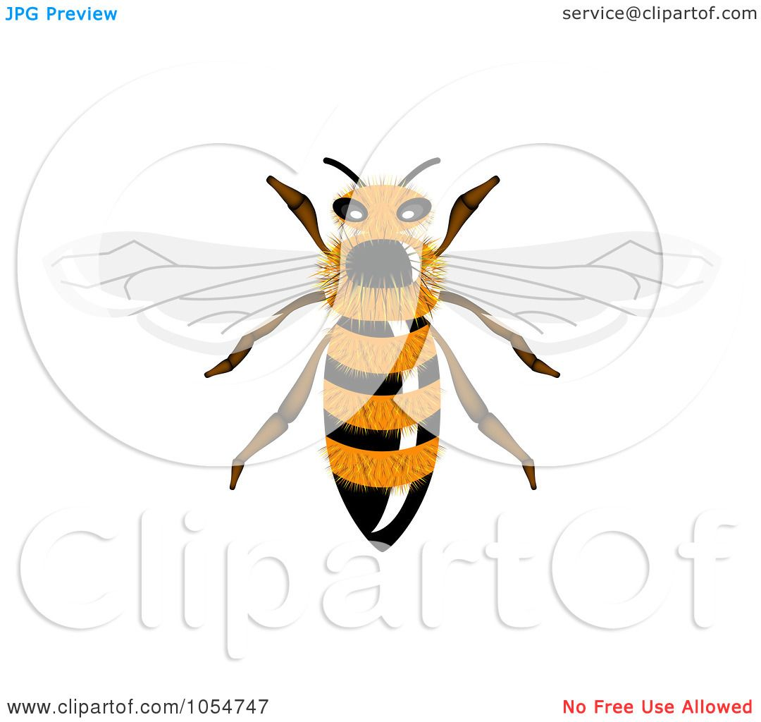 royalty free bee clipart - photo #50