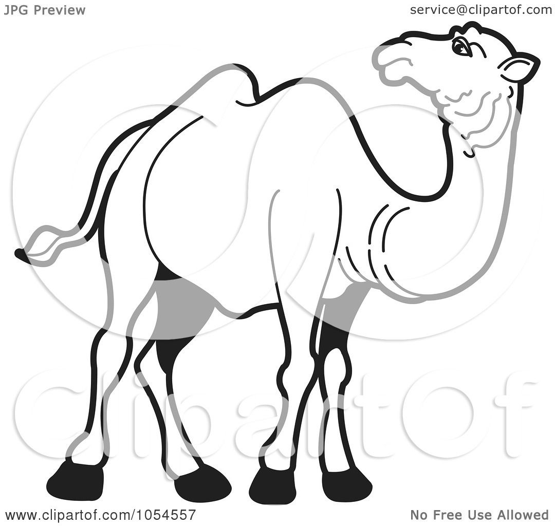 royalty free vector clip art illustration of an outlined camel 2 rh clipartof com