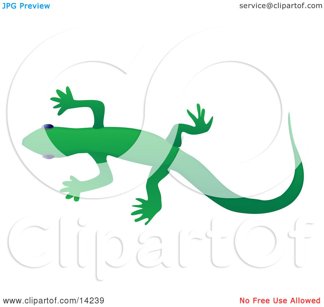 solid green gecko lizard over a white background wildlife clipart